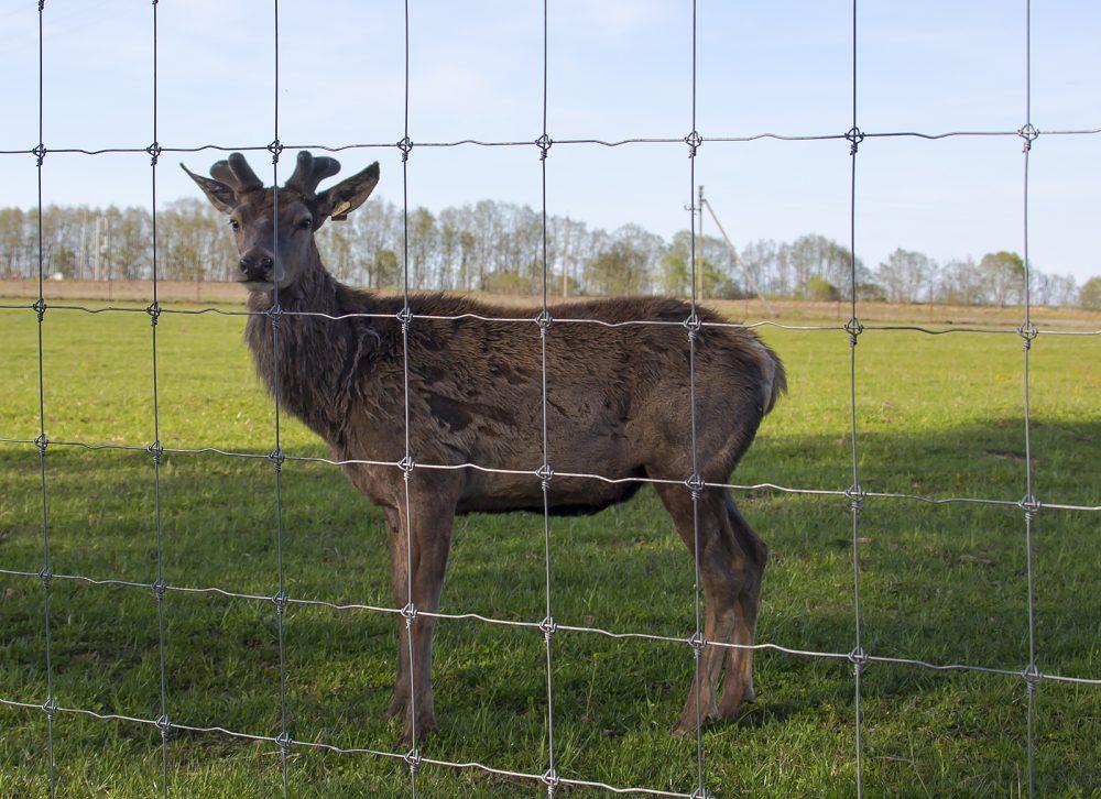 Сетка сварная - Забор - ограждение для животных