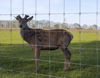 Сетка сварная – ограждение для животных